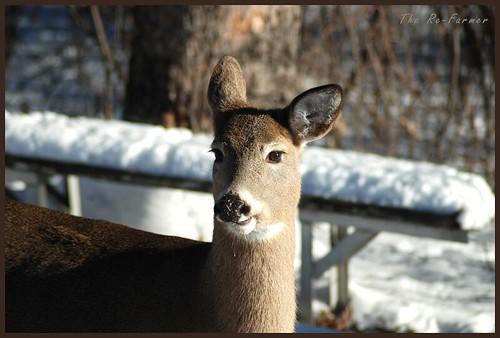 2018-12.deer.solo.5