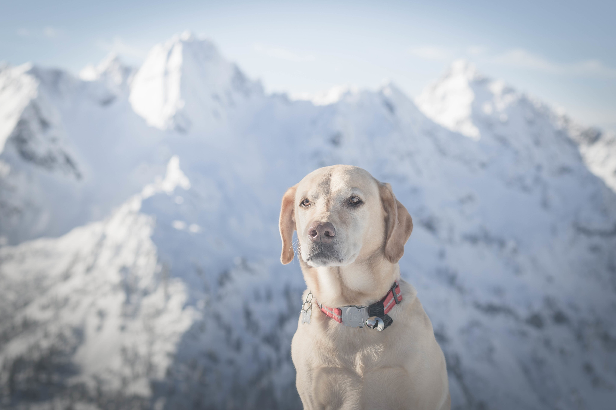 Summit dogs on Avalanche Mountain