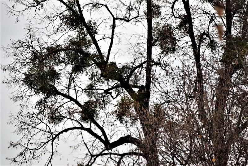 Mistletoe 19.11 (1)