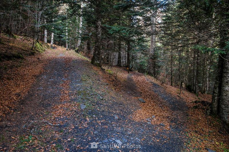 Bifurcación en el camino del bosque cerca del río Joèu