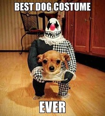 The best dog costume ever