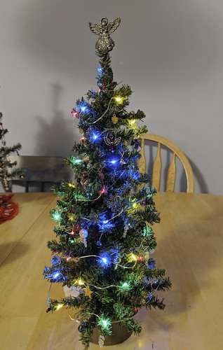 small tree with lights