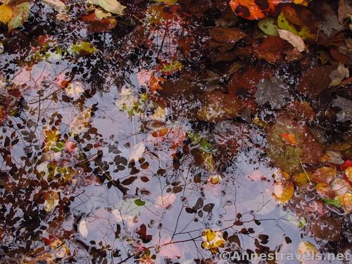 Reflections in a pool in Barnes Creek, Onanda Park near Canandaigua, New York