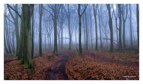 misty forest (kluisbos)