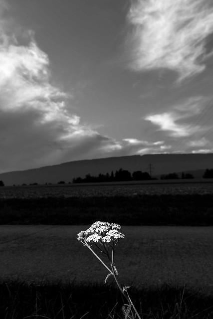 Paysages-Nuée Oiseaux Wavre_012, Canon EOS 80D, Sigma 18-35mm f/1.8 DC HSM