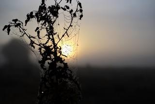 Attrape soleil