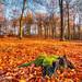 _TGM3326_20181118_1357_Nikon_D500_AuroraHDR2019-edit.jpg