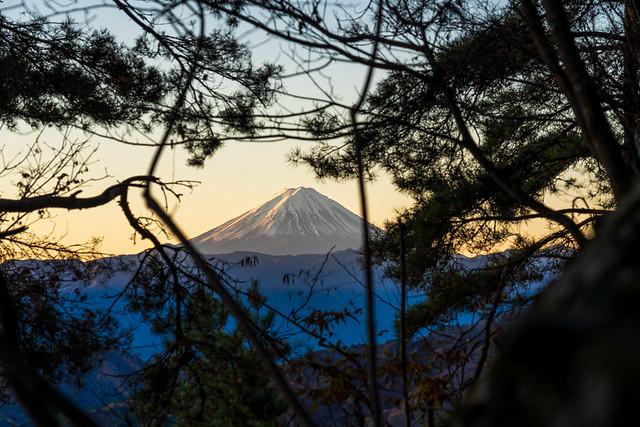 徳和登山口から山中へ・・木々間より富士山