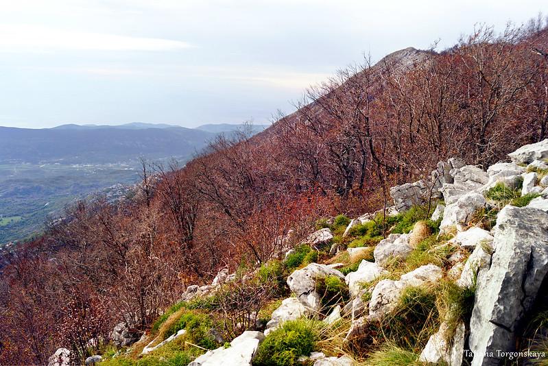Буковый лес, растущий на склоне
