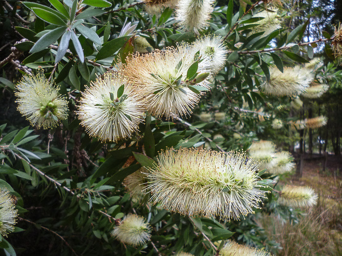 Unusual Bottle  Brush