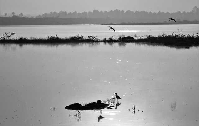 Mono morning..., Canon EOS 550D, Canon EF-S 55-250mm f/4-5.6 IS II
