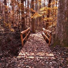 TL Bridge in Wilderness