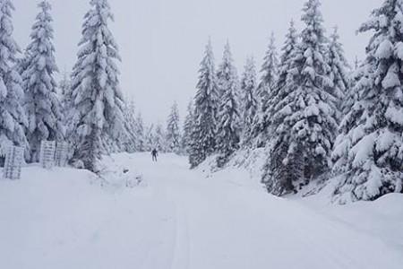 Kam za sněhem?