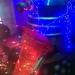 Christmas Dalek - The Fab Café, Manchester 2018
