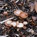 Autumn fungi: deceivers