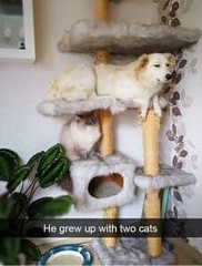 He grew up with cats