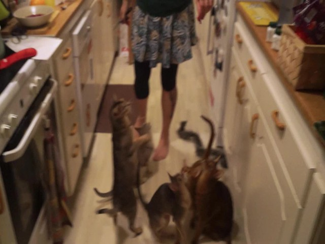 dancingcats