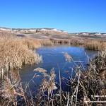 Aves en las lagunas de La Guardia (Toledo) 1-1-2019