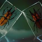 ewww. Bugs!