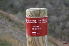 Ribera del Duero ( Castronuño)