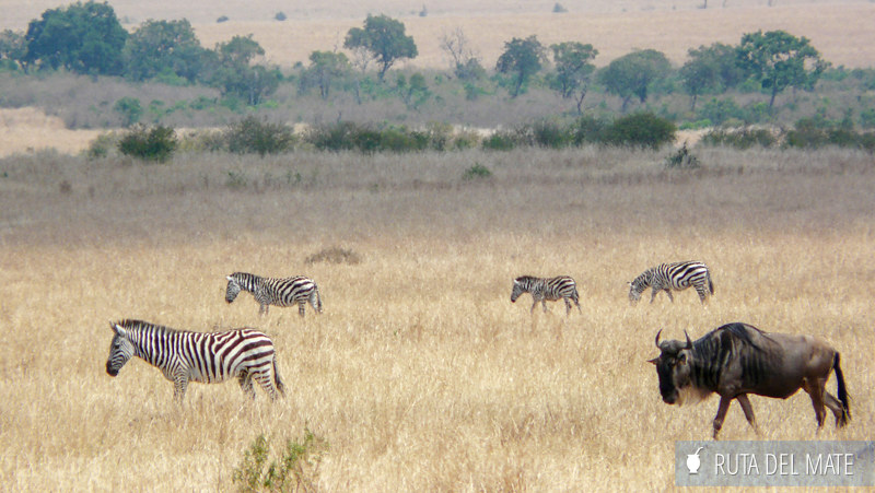 Guia para viajar a Kenia y Tanzania P1140216