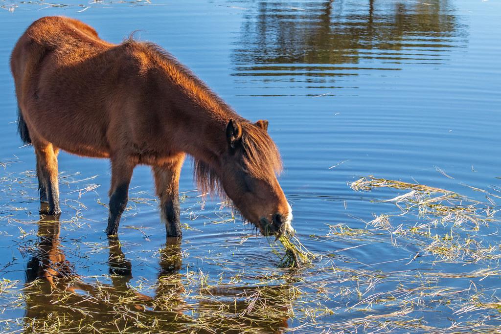 Fotos de animales de todo tipo incluyendo mascotas que más te gustan - Página 15 46719156741_3d8bc94efe_b