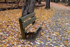 Fall at Gully Brook Park
