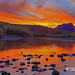 Salt River in Arizona at sunset. by littlebiddle