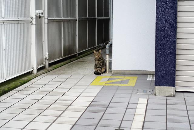 Today's Cat@2018-12-05