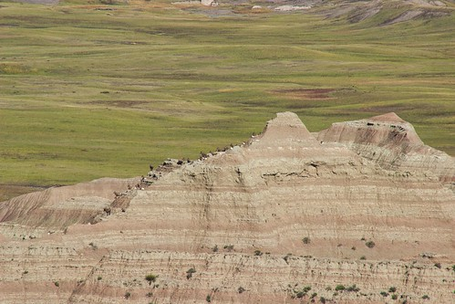 IMG_12496a_Bighorn_Sheep_at_Badlands_NP