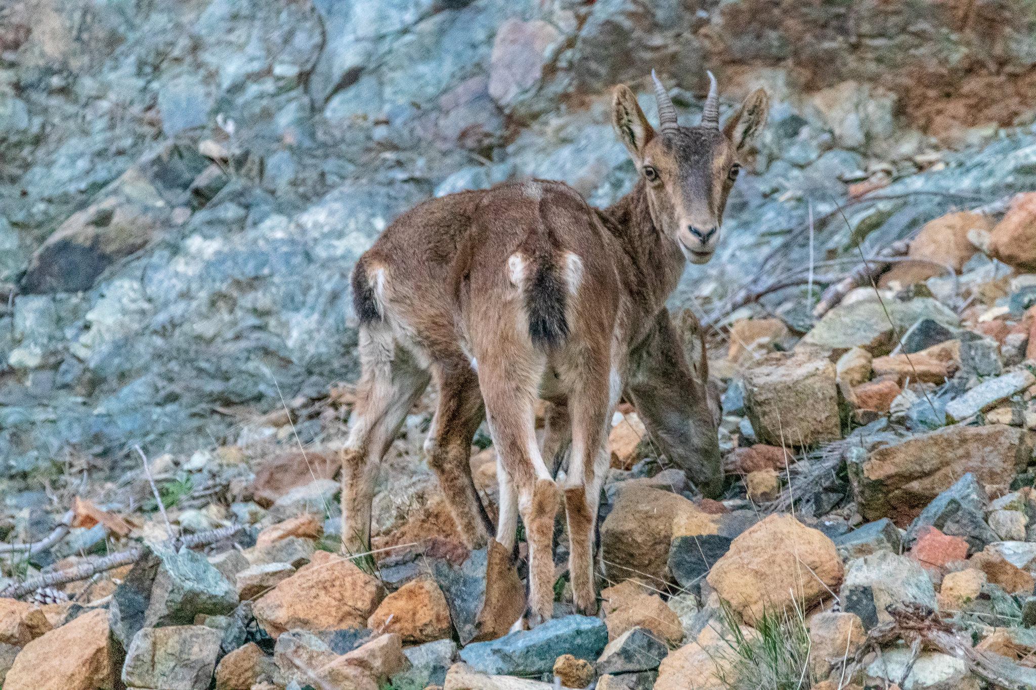 Fotos de animales de todo tipo incluyendo mascotas que más te gustan - Página 12 45010354304_2bbba16063_k