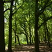 Notton Wood Nature Reserve (42)