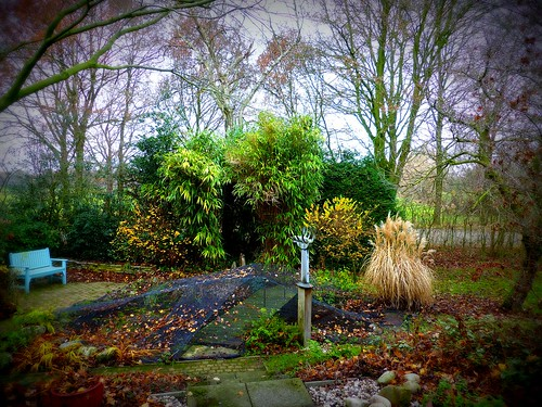 Wintertime Garden