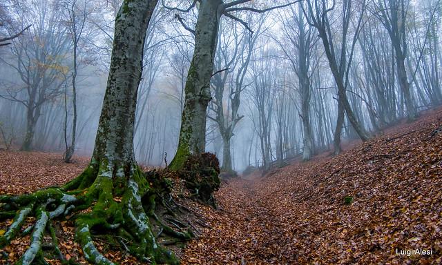 Marche - nel bosco del monte San Vicino