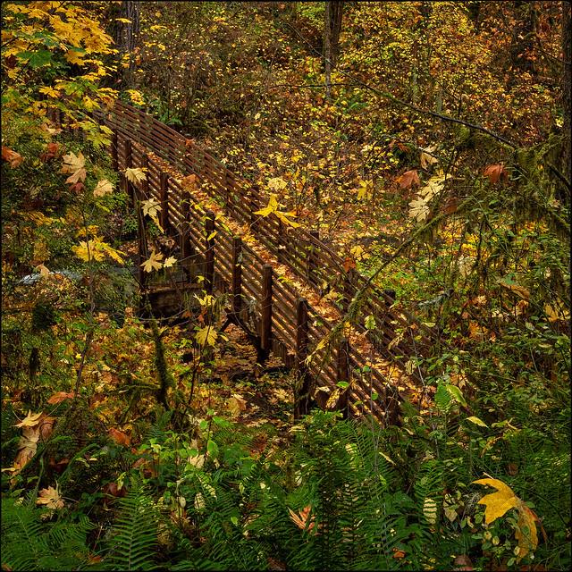 No Escaping Fall Color