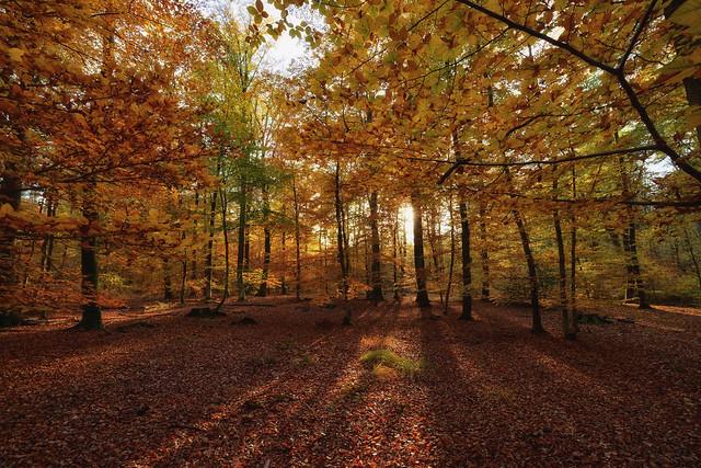 Lueur d'automne, Nikon D7200, Sigma 10-20mm F3.5 EX DC HSM