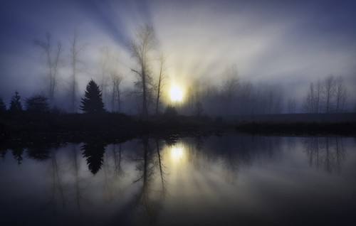 morning foggy pond water landscape meadow park reflections sunrays silhouette wideshot moody forest serene