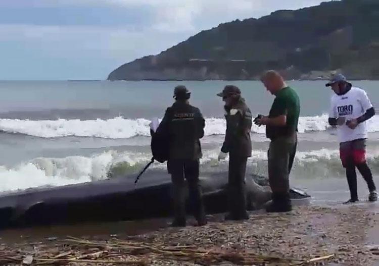 Encuentran un cachalote de unos 5 metros en la playa de Getares