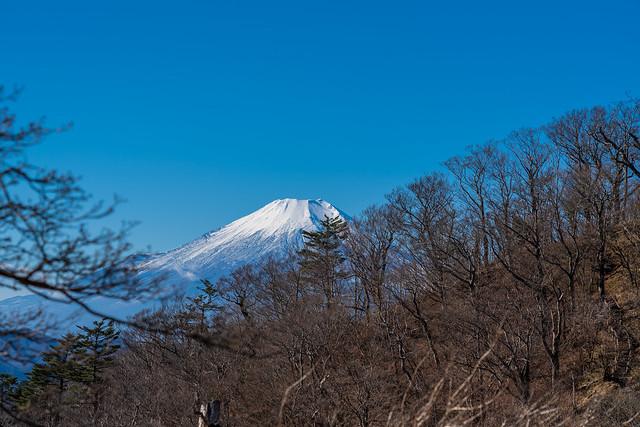 富士を眺めながら加入道山へ