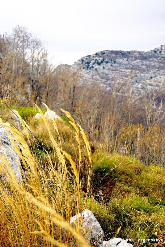 Растительный мир на хребте