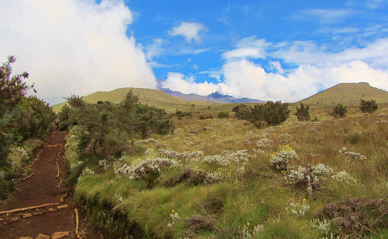 Mt Kilimanjaro via Rongai Route 347