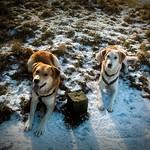Hunde warten im Schnee - 2007:01:27 14:35:27