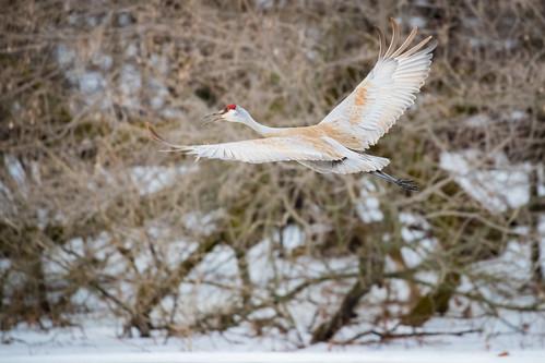 Crane Flight (1)