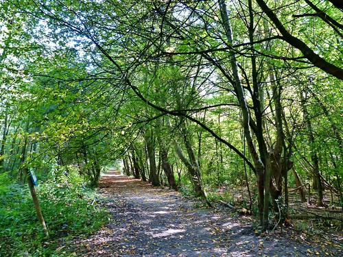 Ename 06 - Van dorp tot bos