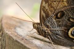 2016-07 Elne Ferme papillons (04) - Photo of Brouilla