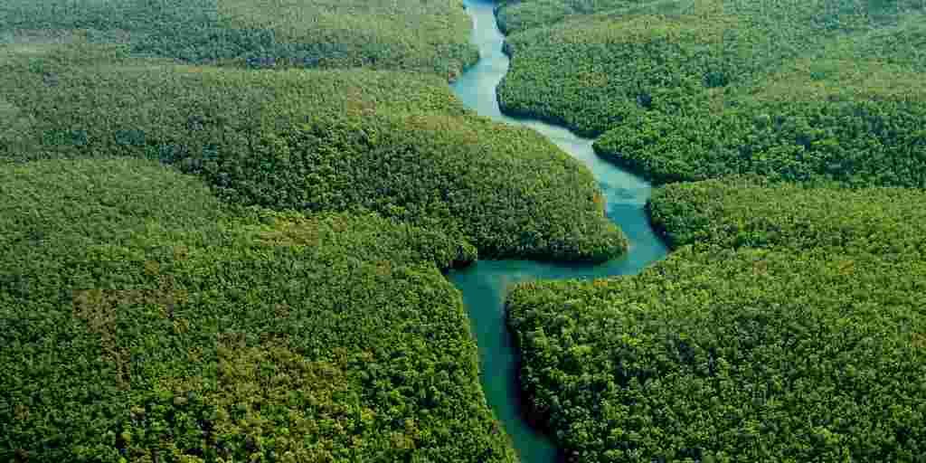 La perte de la biodiversité érode le potentiel de nouveaux médicaments