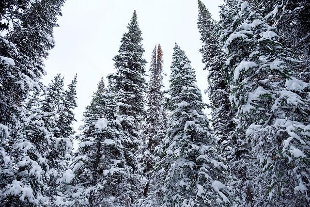 Snowshoeing - Rawson Lake - Jan 2019-2