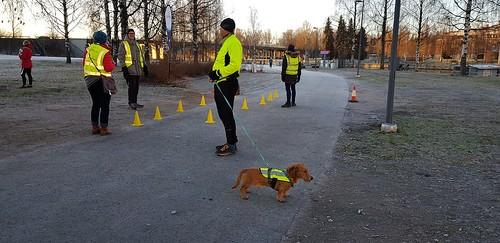 Tampere dog