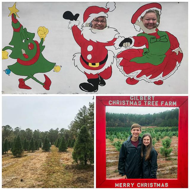 12.1.2018_christmas_tree_shopping