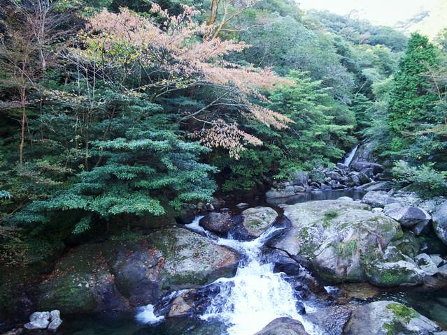 283-Japan-Yakushima